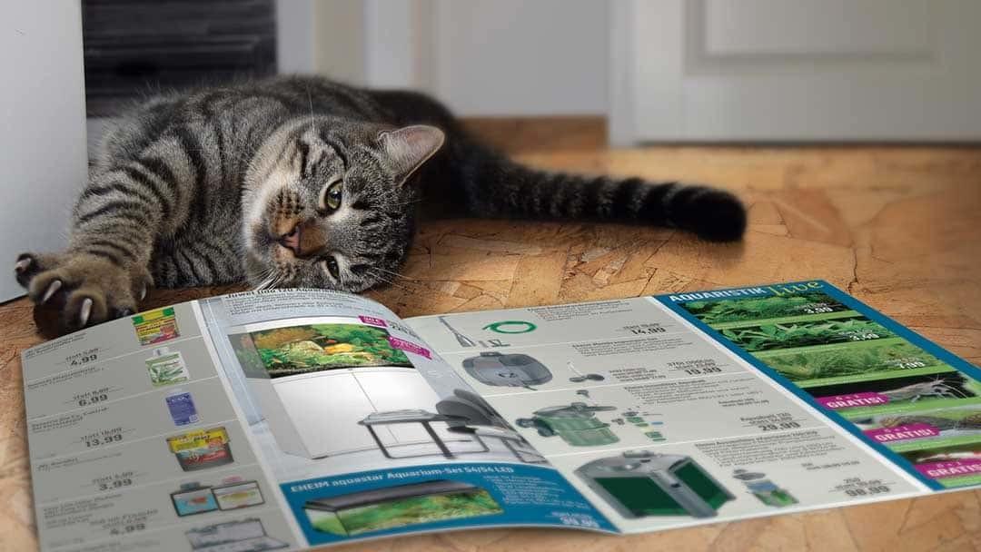 Kölle Zoo Printwerbung